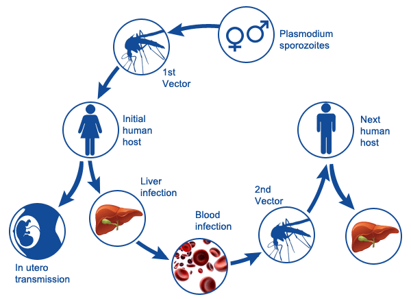 Malaria Fever In Children: Symptoms, Treatment, And Prevention In The Rainy Winter